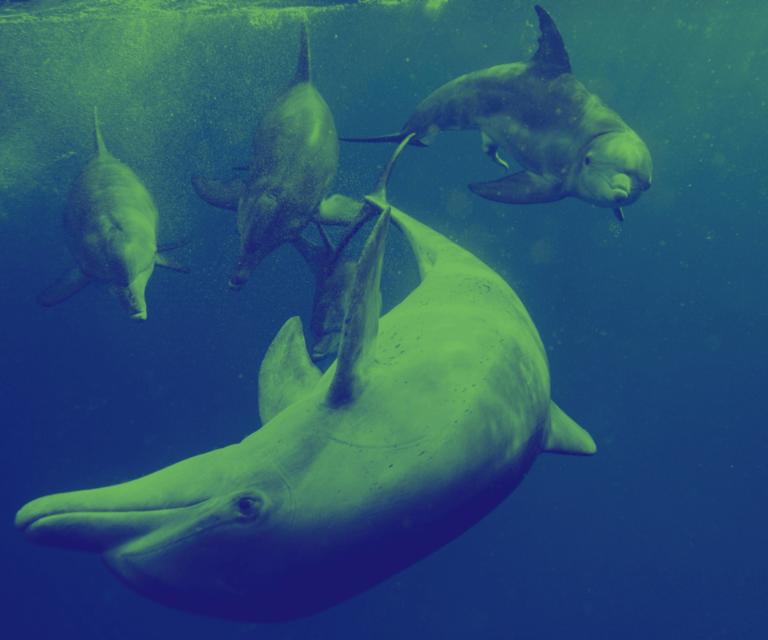 Mascot web page   dolphin bluegreen