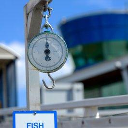 Royal Quays fish scales