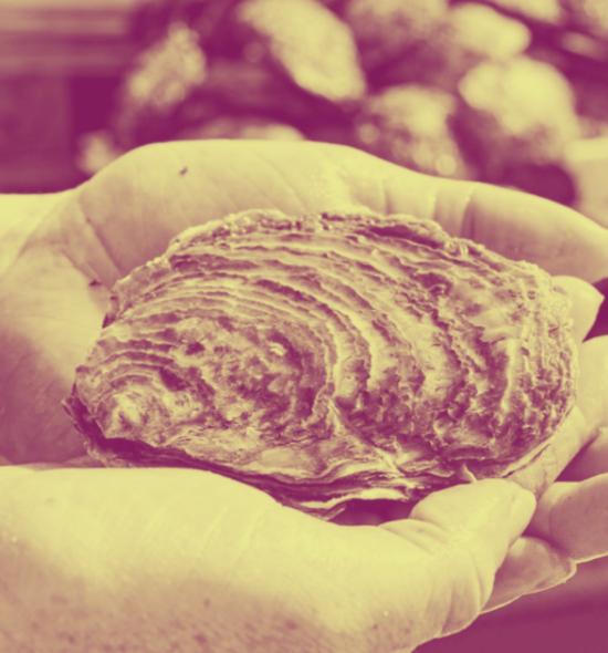 Oyster web Image